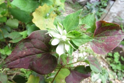 庭の花!_f0139520_14344055.jpg
