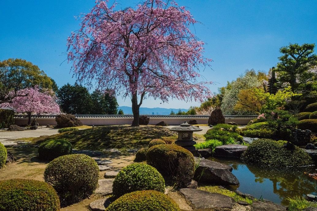 2019京都桜~正法寺_e0363038_11030376.jpg