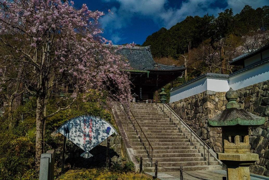 2019京都桜~善峯寺_e0363038_11095394.jpg
