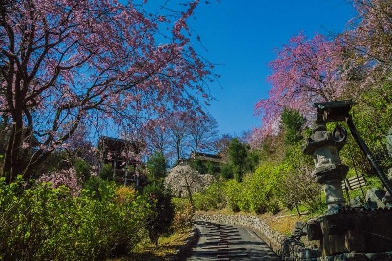 2019京都桜~善峯寺_e0363038_11102917.jpg