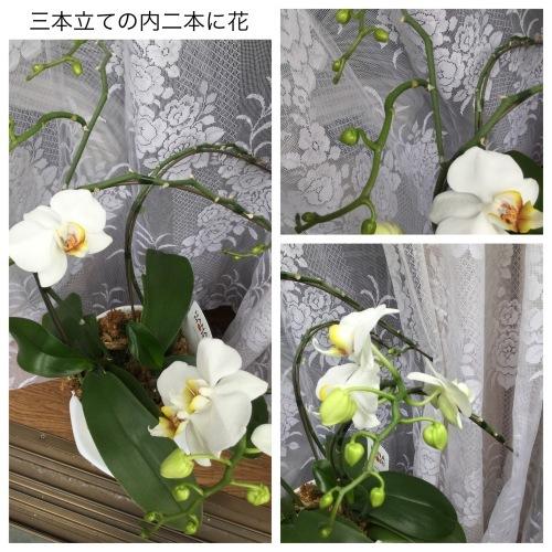 娘の料理 & 洗濯マグちゃん & 花 & ラインペイ_a0084343_09481911.jpeg