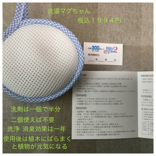 娘の料理 & 洗濯マグちゃん & 花 & ラインペイ_a0084343_09493022.jpeg