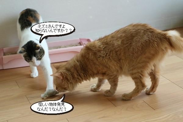 ご縁を頂きましたと卒業が近い保護猫さんのお勉強_e0151545_21383542.jpg