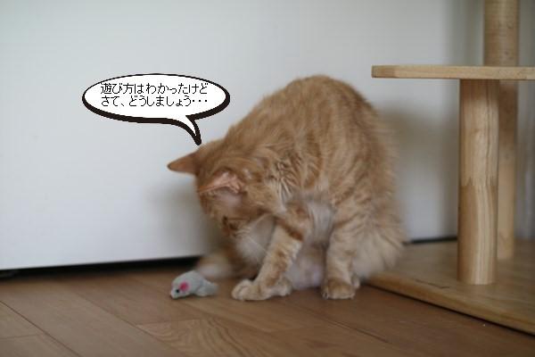 ご縁を頂きましたと卒業が近い保護猫さんのお勉強_e0151545_21392256.jpg