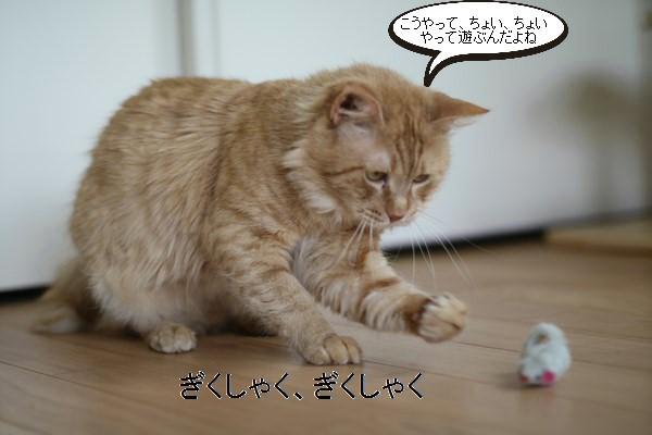 ご縁を頂きましたと卒業が近い保護猫さんのお勉強_e0151545_21395291.jpg