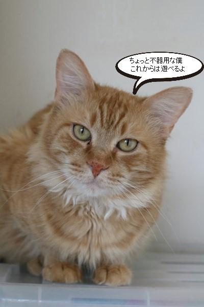 ご縁を頂きましたと卒業が近い保護猫さんのお勉強_e0151545_21401008.jpg