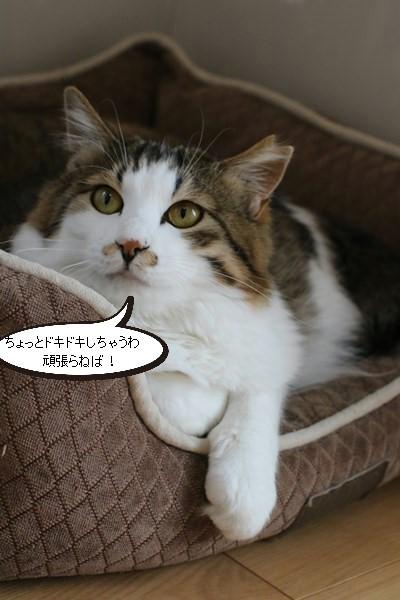 ご縁を頂きましたと卒業が近い保護猫さんのお勉強_e0151545_21463034.jpg