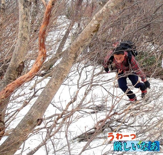 <2019.5.3>【令和・初登山】中高同級仲間と故郷名峰「米山」(柏崎)を登る_c0119160_19564909.jpg