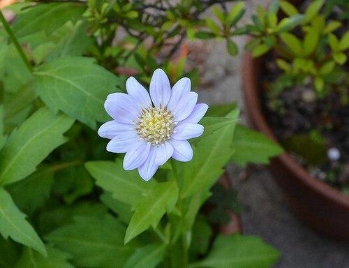 いま我が家の庭で_b0102572_10043467.jpg