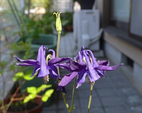 いま我が家の庭で_b0102572_10045784.jpg