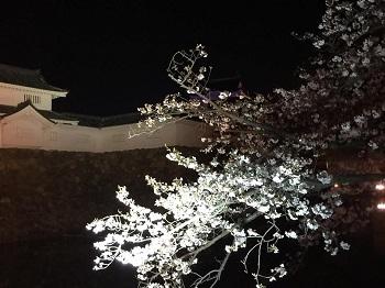 夜桜見物 岸和田城で 超!観光気分~♪_e0123286_19270677.jpg