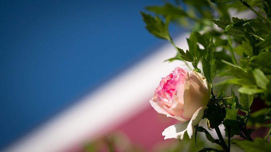 薔薇を愛でるテディベアたち_d0353489_17383374.jpg