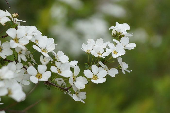 白い花_d0162994_07231362.jpg
