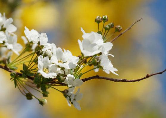 白い花_d0162994_07234366.jpg
