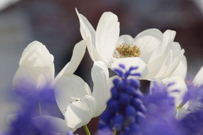 白い花_d0162994_07243886.jpg