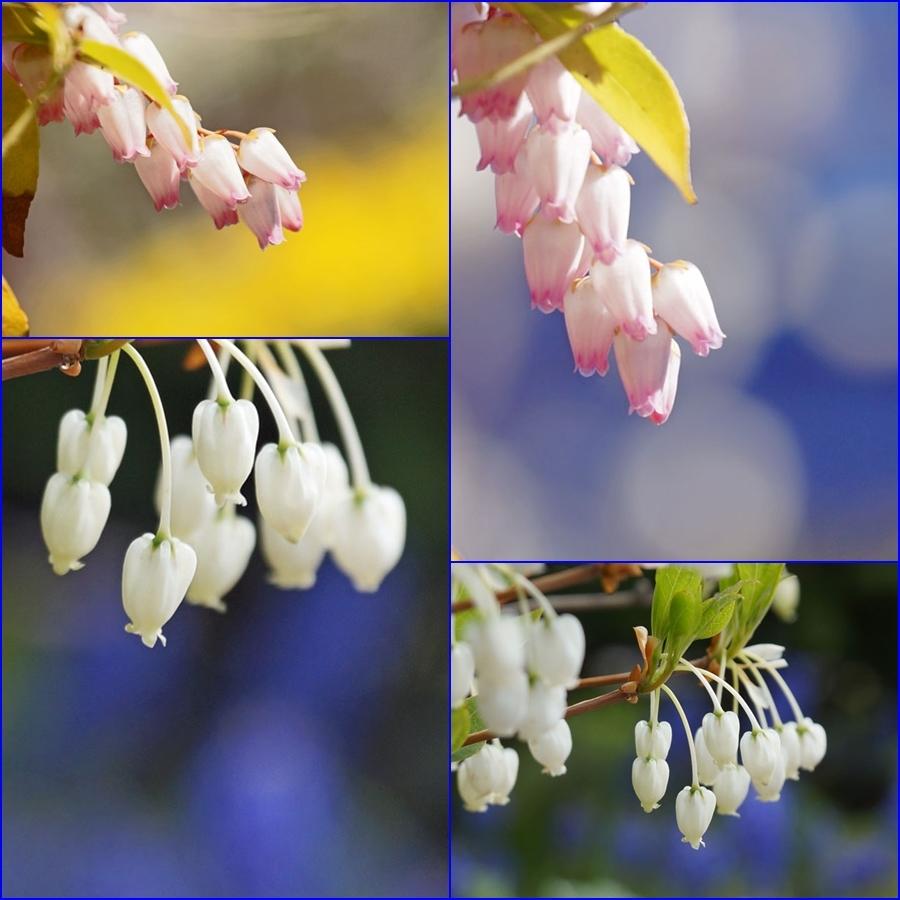 白い花_d0162994_07252460.jpg