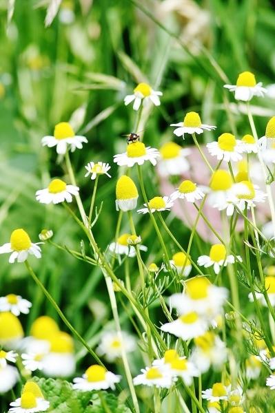 野の花の美しさな 話(^^♪_f0195711_09065387.jpg