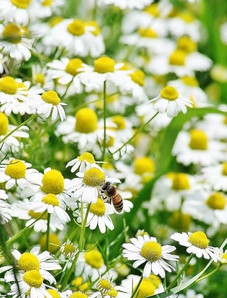 野の花の美しさな 話(^^♪_f0195711_09075317.jpg