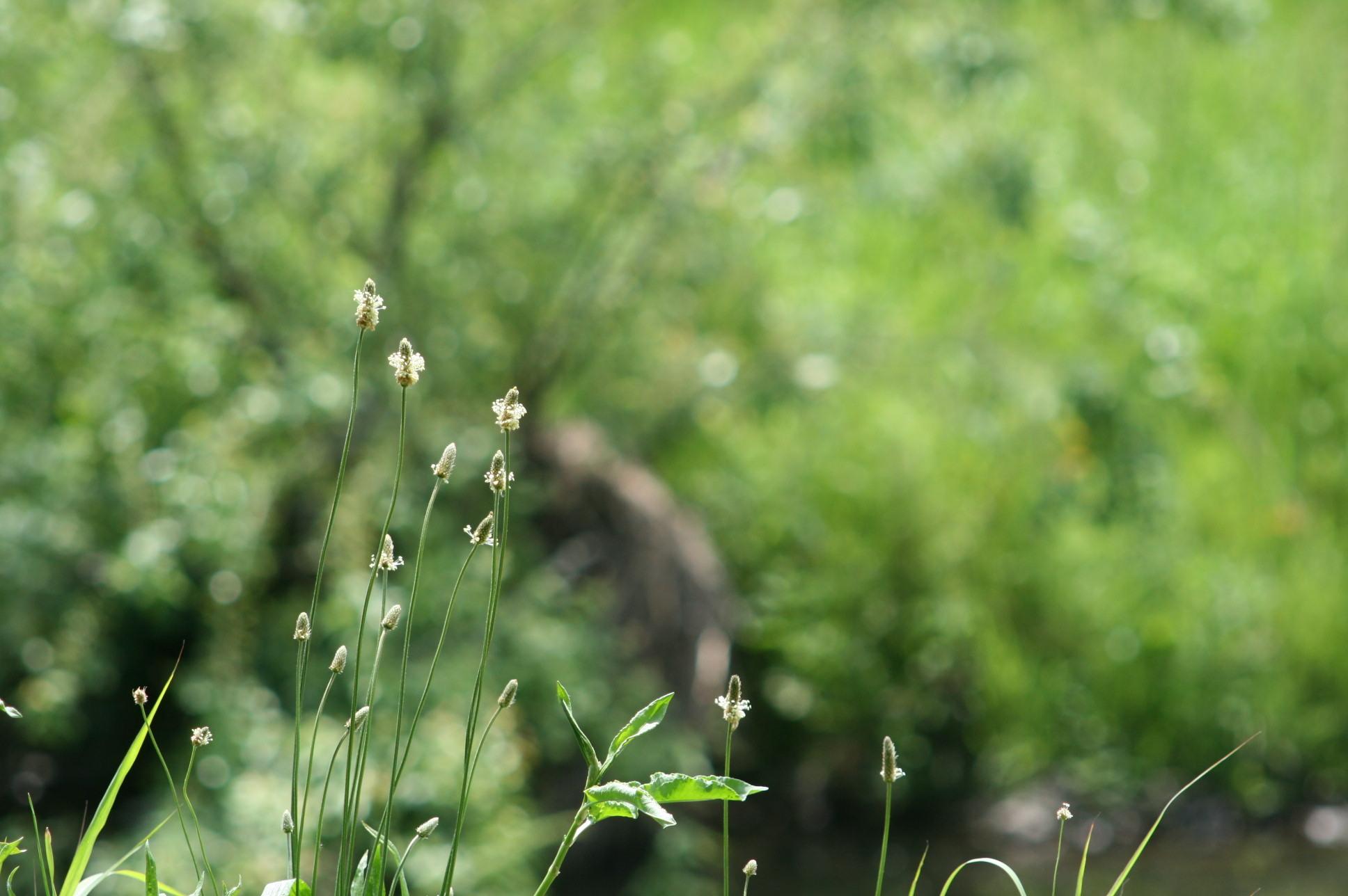 野の花の美しさな 話(^^♪_f0195711_09082275.jpg