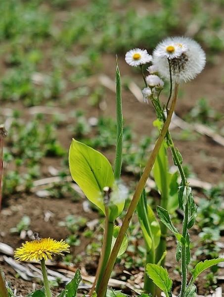 野の花の美しさな 話(^^♪_f0195711_09085403.jpg