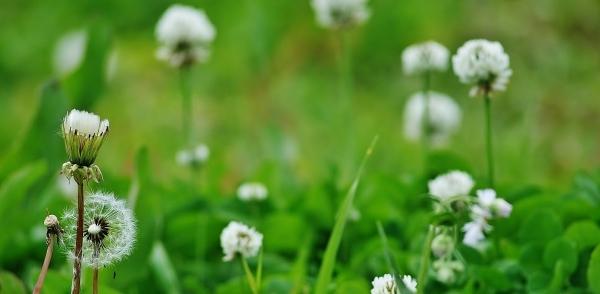 野の花の美しさな 話(^^♪_f0195711_09091658.jpg