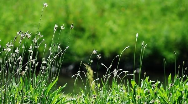 野の花の美しさな 話(^^♪_f0195711_09103942.jpg