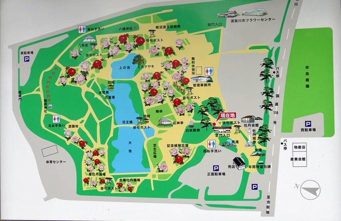 福島県須賀川市 「ボタン園」_d0106628_20442824.jpg