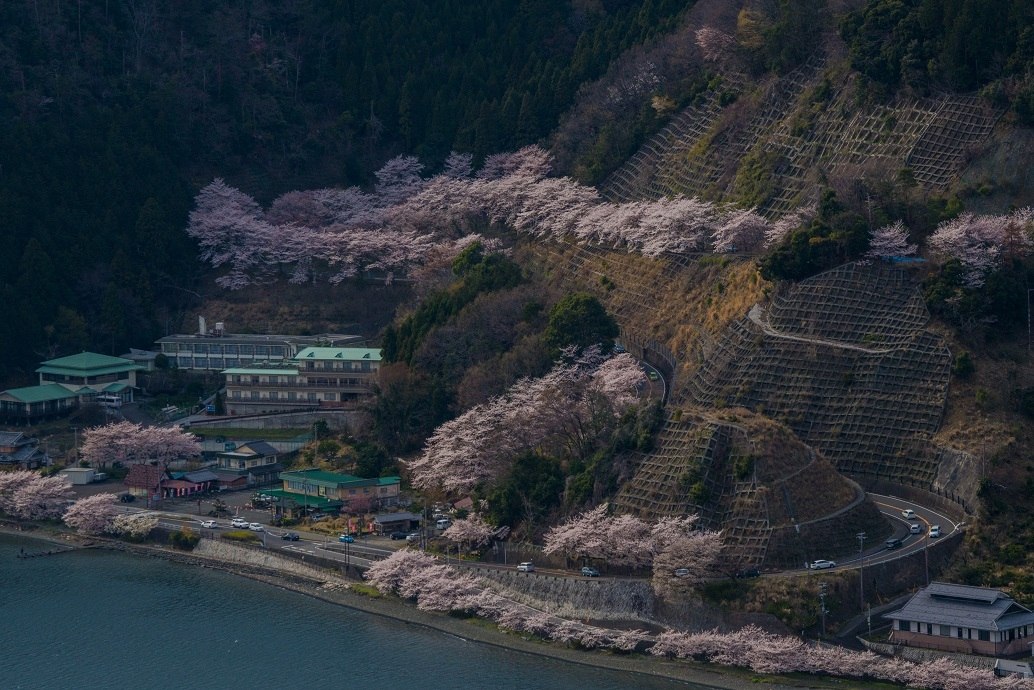 2019滋賀桜~海津大崎_e0363038_11145713.jpg