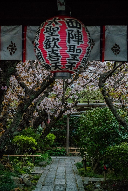 2019京都桜~雨宝院_e0363038_11224558.jpg