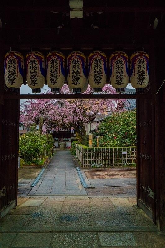 2019京都桜~地蔵院の枝垂れ桜_e0363038_13473946.jpg