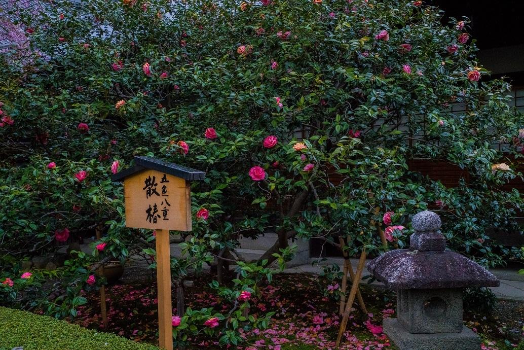2019京都桜~地蔵院の枝垂れ桜_e0363038_13474625.jpg