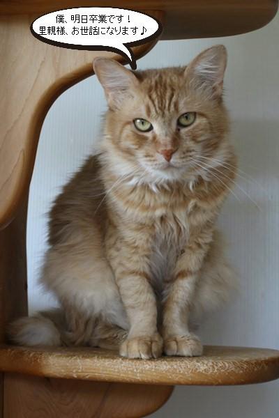 保護猫さん達の卒業_e0151545_21145074.jpg
