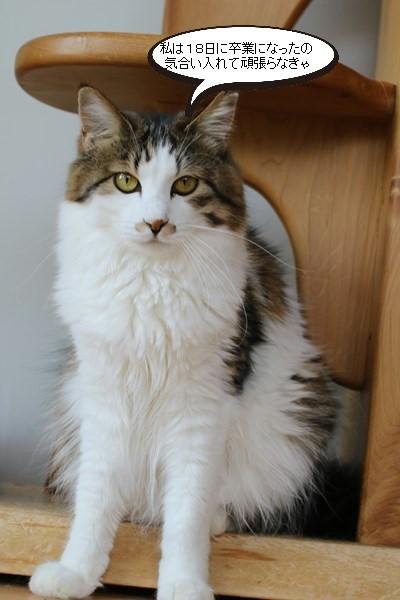保護猫さん達の卒業_e0151545_21151152.jpg