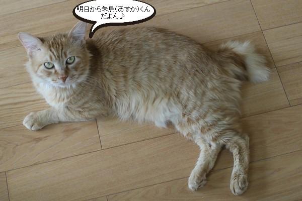 保護猫さん達の卒業_e0151545_21153932.jpg