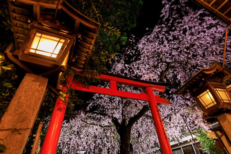 桜咲く京都2019 水火天満宮のしだれ桜の朝と夜_f0155048_22275413.jpg