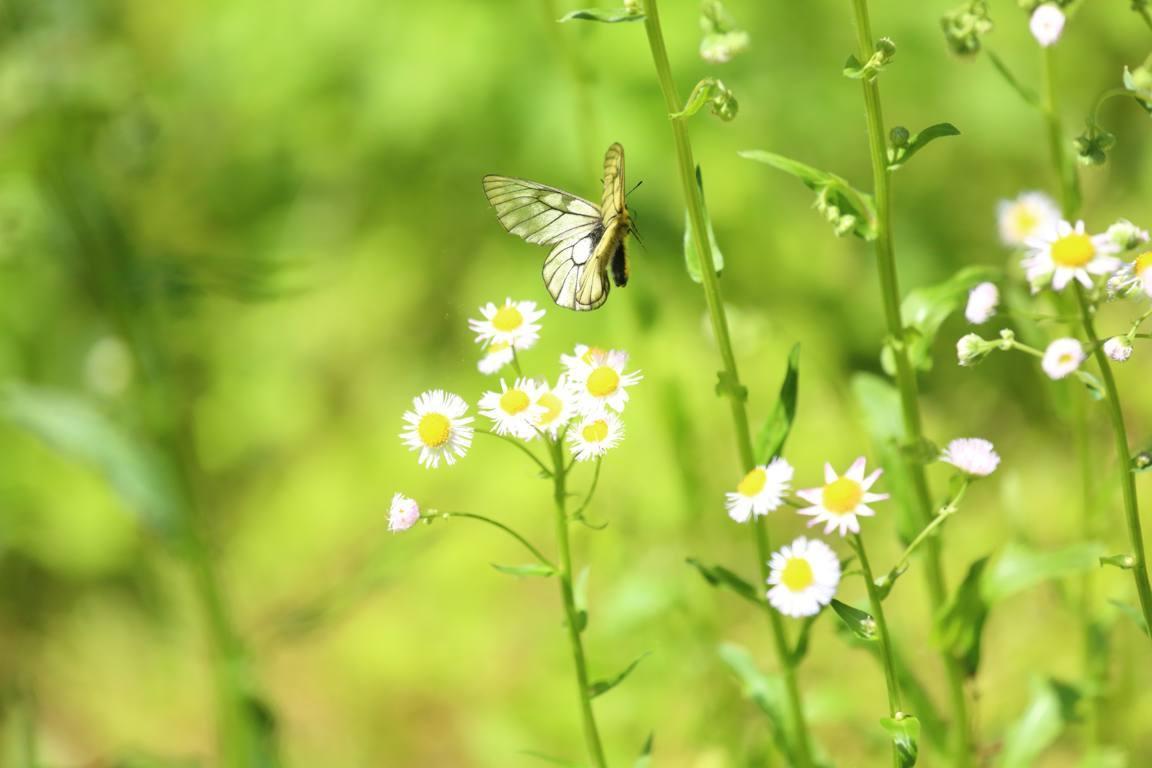 春の妖精_e0403850_15014411.jpg