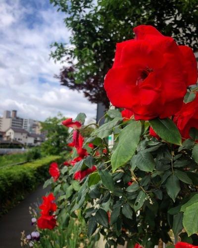 花咲ツアー2019、北海道編【2】_e0071652_10315164.jpg