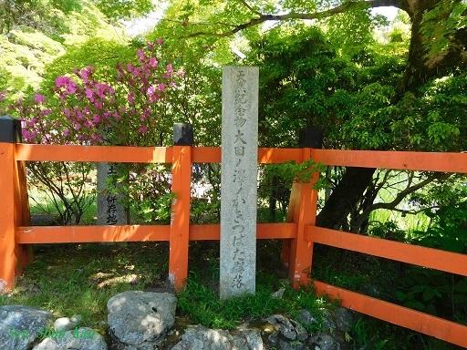 大田神社のかきつばた  2019年5月11日_a0164068_17184711.jpg