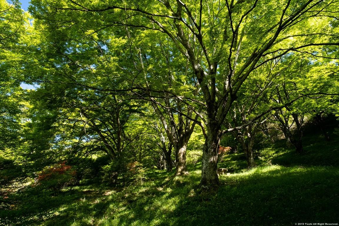 鳥見山 新緑とツツジ_c0350572_16182736.jpg
