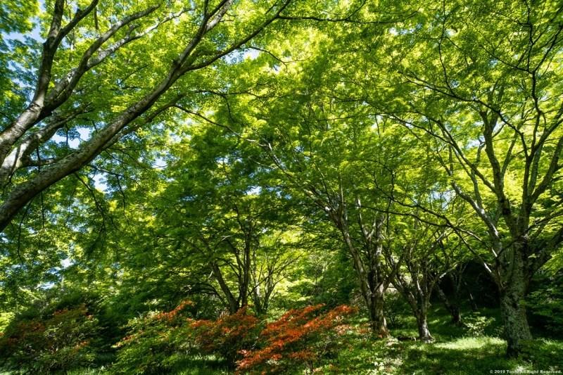 鳥見山 新緑とツツジ_c0350572_16184915.jpg
