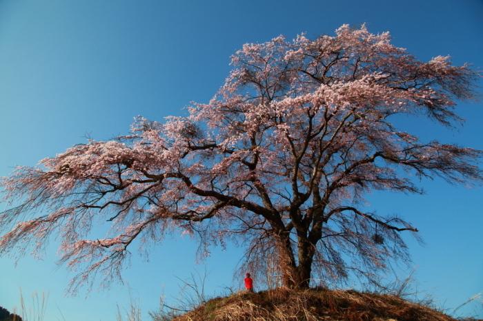 今年を振り返る 4月・群馬桜巡り_e0165983_14173960.jpg