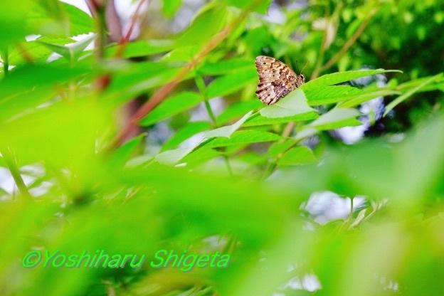 〜緑力〜_c0152400_06074445.jpg
