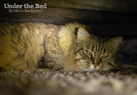 ベッドの下で_b0253205_05093136.jpg