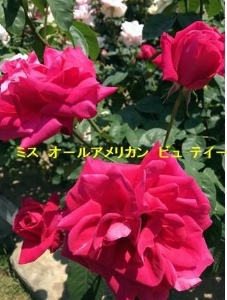 a0105023_22031437.jpg
