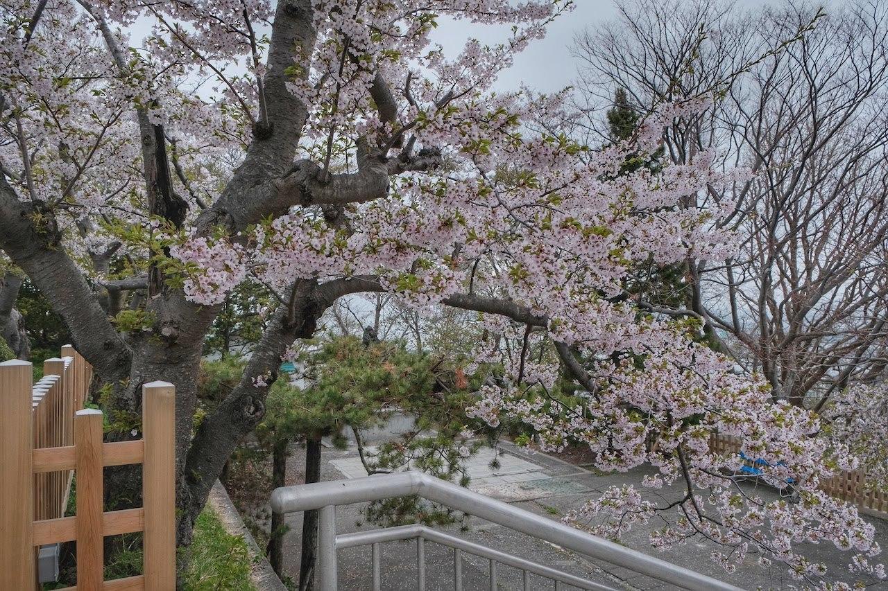 GW帰省8 ~ 室蘭みたら、室蘭八幡宮、視界ゼロの測量山、札幌に住むのありかも~_b0024832_01343173.jpg