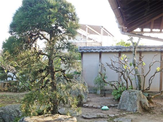 庭の整理_f0045132_12104950.jpg