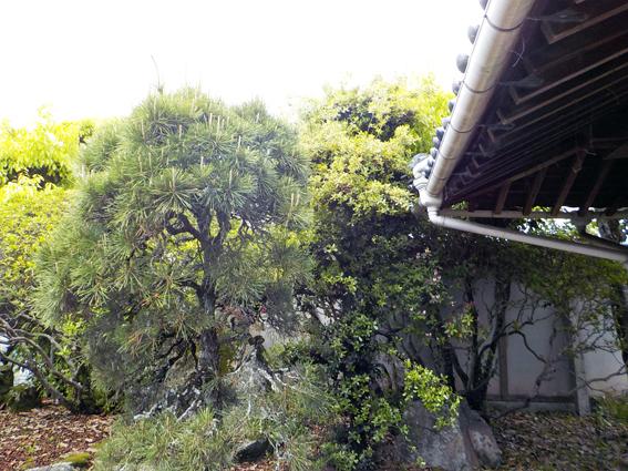 庭の整理_f0045132_12105737.jpg