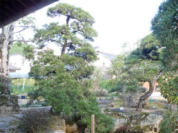 庭の整理_f0045132_12112182.jpg