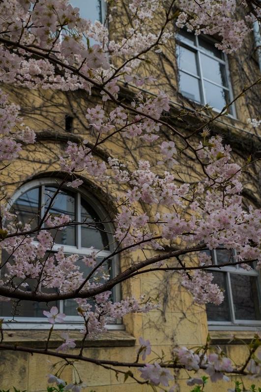 圧倒的桜。平成FINAL_e0363038_14214208.jpg