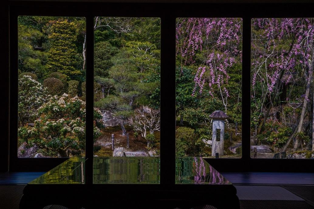 圧倒的桜。平成FINAL_e0363038_14215839.jpg